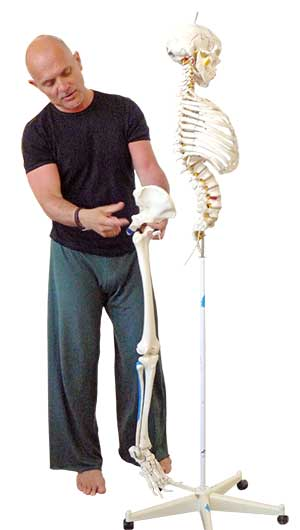 Gary Carter, Yoga, Anatomy, Skeleton, Scaravelli