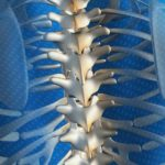 Scaravelli, Yoga, workshop, Spine, Spinal Integration, Catherine Annis, UK
