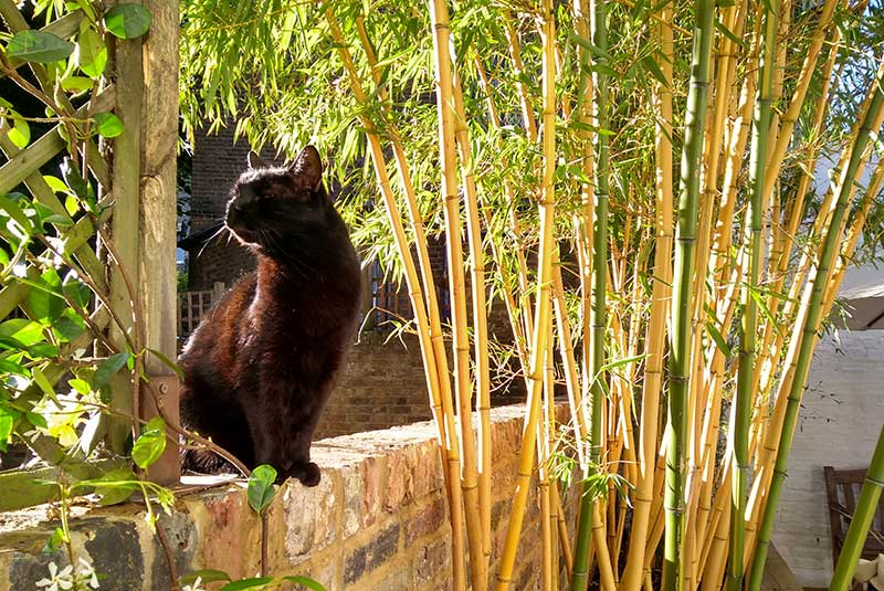 Garden, Scaravelli Inspired Yoga, Catherine Annis
