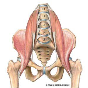 Scaravelli Inspired Yoga, Workshop, Zoom, online, Psoas, anatomy