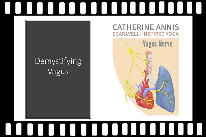 Scaravelli Inspired Yoga, Workshop Video, Vagus Nerve, Catherine Annis